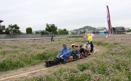 阿曽レンゲ畑1